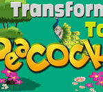 Transform to Peacock