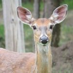 """Deer""""s Life"""