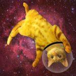 SPACE CAT 2.0
